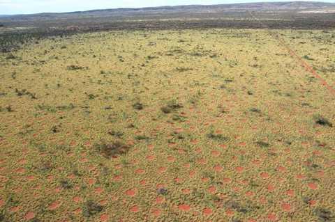 Hình ảnh hàng nghìn vòng tròn thần tiên xuất hiện ở miềnTây Australia.