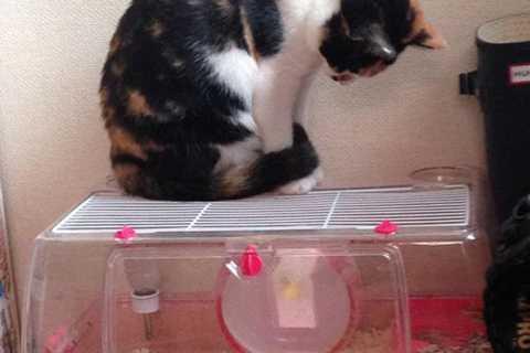 Mèo dành nhiều tiếng để quan sát cách chuột