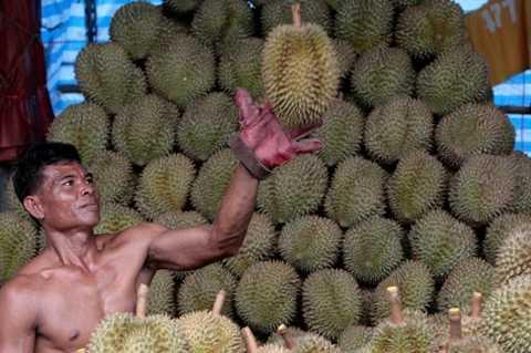 Sầu riêng. Món ăn mà các quốc gia Đông Nam Á thường gọi là