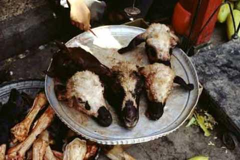 Đầu cừu nấu canh. Đây được coi là một món ăn khá nổi tiếng ở Iran. Thực tế món ăn này được chế biến từ những phần gần như là chỉ có thể là bỏ đi của con cừu: Đầu, móng guốc và dạ dày. Tất cả được bỏ vào nấu chung cùng gia vị và được xem như món ăn hấp dẫn của nước này. Kale Pache cũng có mặt ở một số nước Ả Rập khác.
