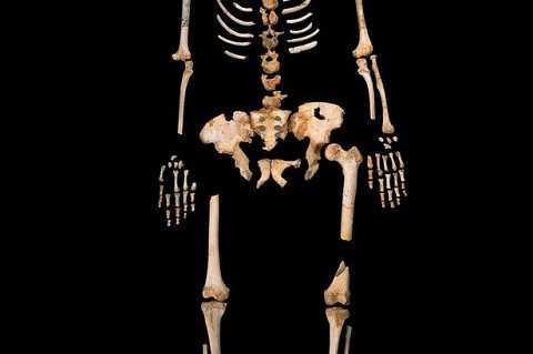 Hình dạng bộ xương được khai quật