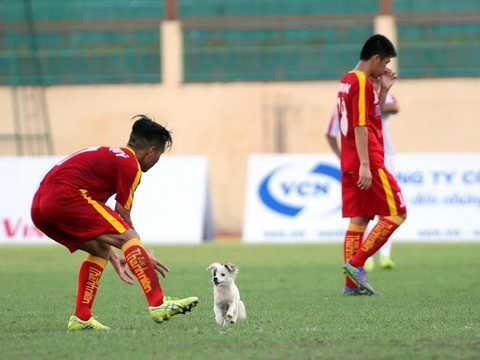 Chó cắn Thái Quý