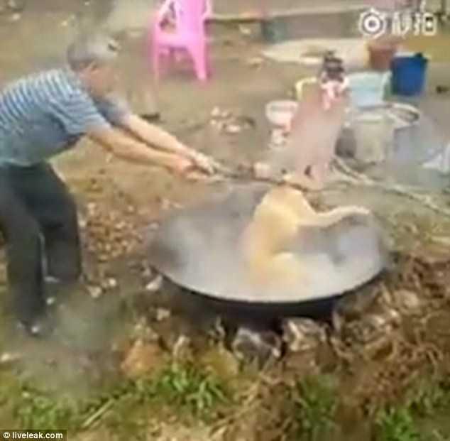 Phẫn nộ cảnh nông dân Trung Quốc luộc chú chó còn sống