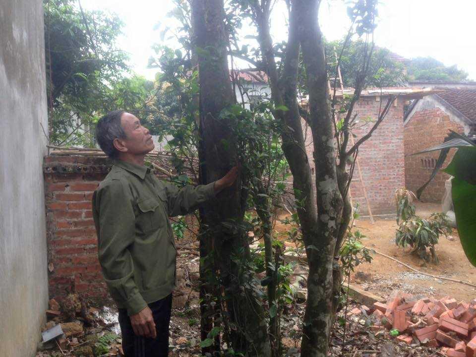 Ông Thư bên cây chè 200 năm tuổi của mình