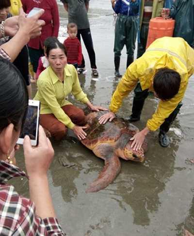 Con rùa được vợ chồng anh Bé đưa vào bờ cho bà con xem trước lúc mang trở lại biển.