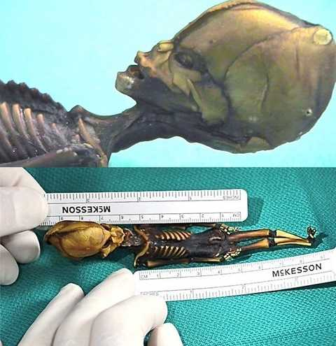 hài cốt được cho là của người tí hon ngoài hành tinh ở Chile phát hiện năm 2003