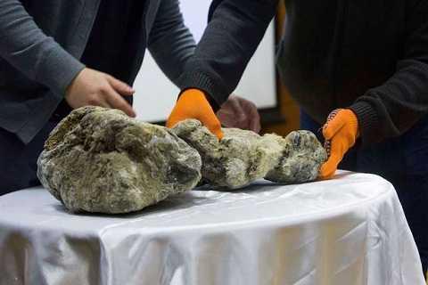 Chú sư tử được tìm thấy từ tảng băng vĩnh cửu ở Siberia. Ảnh Mirror