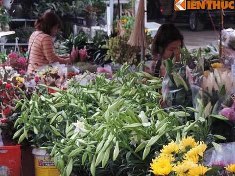 Bà Linh cho biết thêm, hoa loa kèn   thời điểm này chỉ có ở vườn hoa Mê Linh (Hà Nội) mới có nhưng cũng không   nhiều. Cả vườn chỉ nhặt được vài bó và chuyển đến chợ hoa để mối cho   người bán buôn.