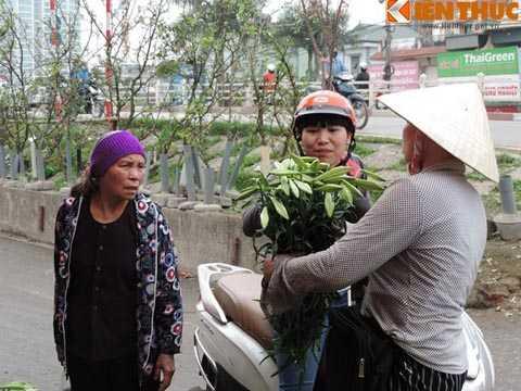 Dù rất giá rất chát nhưng rất nhiều người mua vẫn không ngại chi tiền để có được một bó hoa loa kèn đẹp.