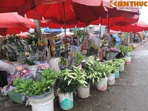 Mùa hoa loa kèn sẽ nở rộ vào giữa tháng 4   hàng năm. Người dân Hà Nội rất ưa chuộng loài hoa này, coi hoa như một   nét đẹp đặc trưng của Hà Nội.