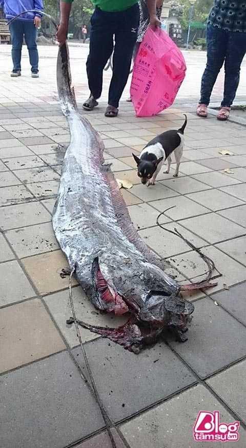 Hình ảnh về con cá kì dị