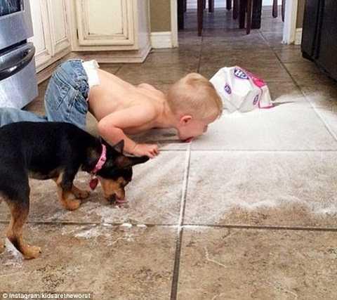 Không biết bố mẹ sẽ phản ứng như thế nào khi thấy con mình cùng chú chó đang liếm bột rơi vãi trên sàn nhà nhỉ?