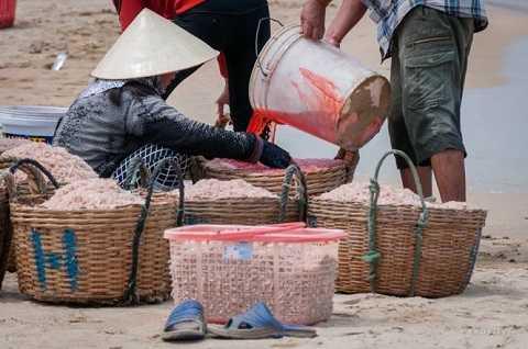 Nhuộm đỏ con ruốc tại Phú Yên. Ảnh Lê My