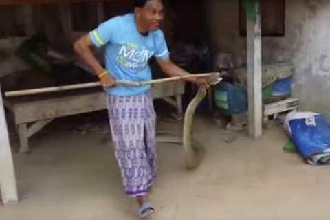 Ông Naja đã dũng cảm bắt con rắn chỉ với một chiếc cán chổi. Ảnh The Mirror