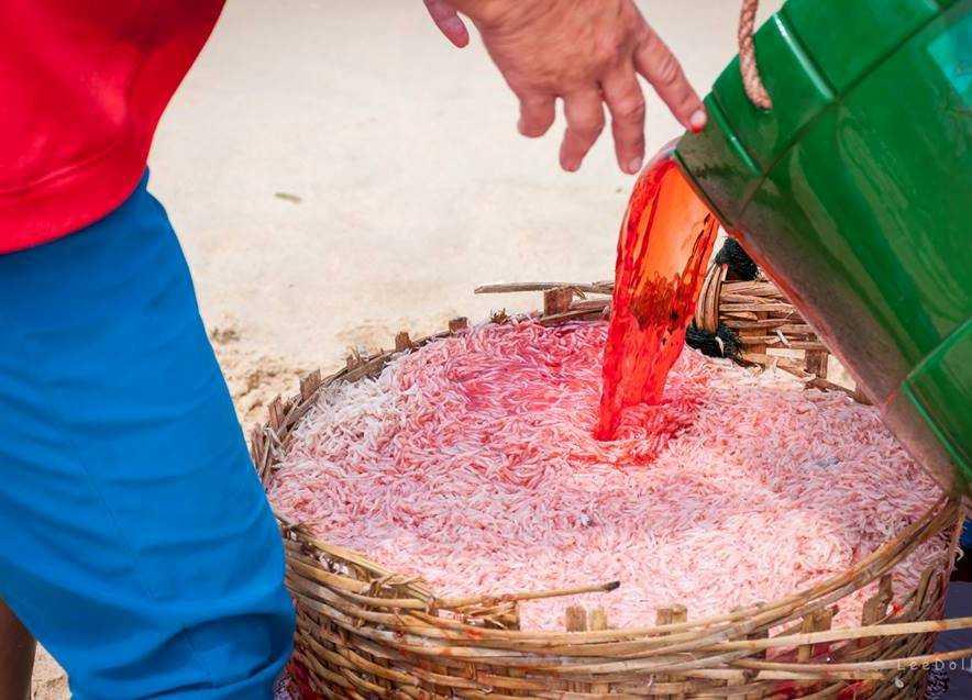 Hình ảnh ruốc 'tắm máu' ở Phú Yên được chia sẻ từ Facebook My Lê