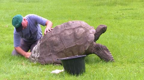'Cụ rùa' Jonathan được tắm lần đầu tiên sau gần 2 thế kỷ
