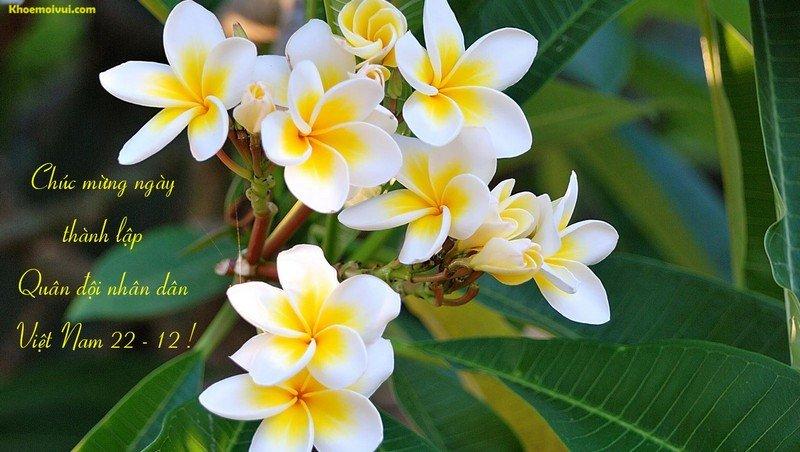 Nhung tam thiep y nghia chuc mung Ngay Quan doi Nhan dan Viet Nam 22/12 hinh anh 5