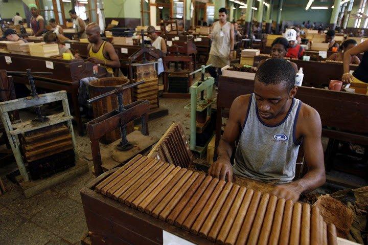 Bi mat cigar Cuba qua con mat nguoi 'trong cuoc' - Ky II: Xi ga Cuba duoc lam nhu the nao? hinh anh 2