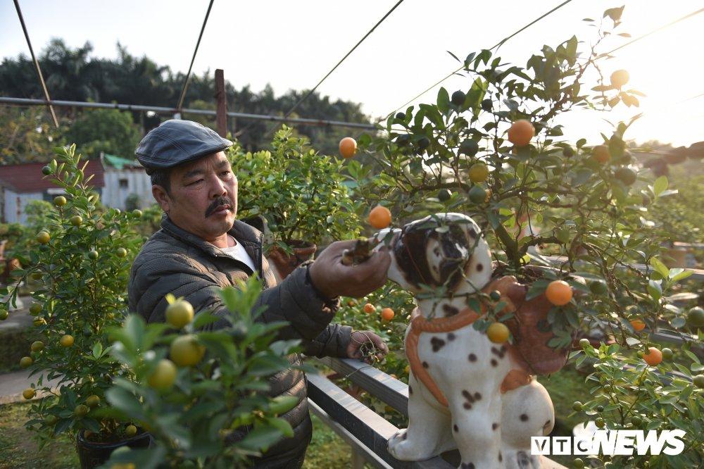 Anh: Ngam quat bonsai trong tren lung cho dom phuc vu Tet Nguyen dan 2018 hinh anh 1