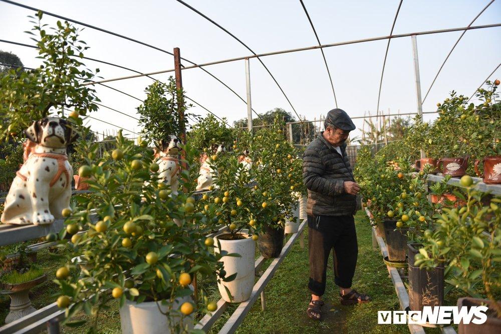 Anh: Ngam quat bonsai trong tren lung cho dom phuc vu Tet Nguyen dan 2018 hinh anh 7