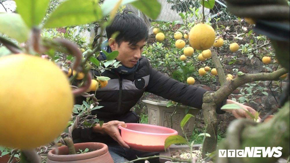 Anh: Nong dan Hung Yen trong chanh vang phu quy bang dau nanh hut khach dip Tet hinh anh 2