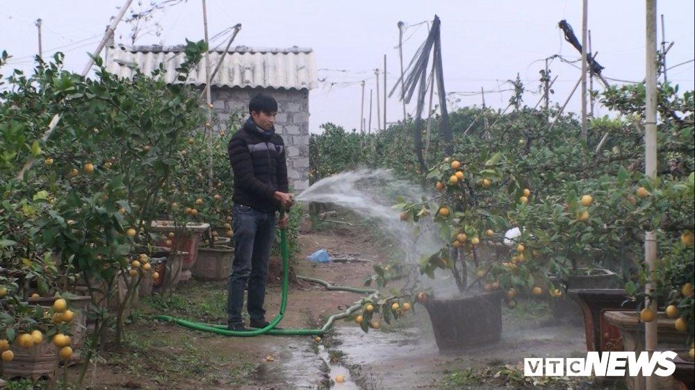 Anh: Nong dan Hung Yen trong chanh vang phu quy bang dau nanh hut khach dip Tet hinh anh 9