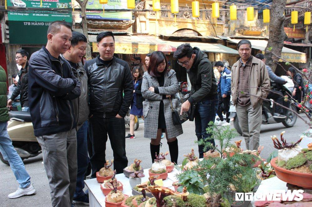 Anh: Nam linh chi bonsai doc la hut khach choi Thu do hinh anh 8