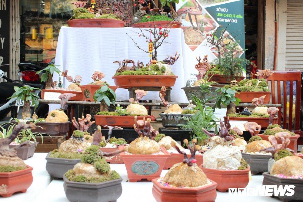 Anh: Nam linh chi bonsai doc la hut khach choi Thu do hinh anh 1