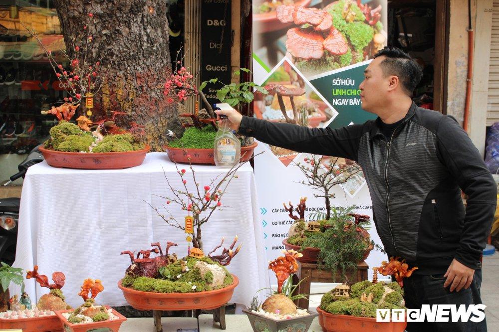 Anh: Nam linh chi bonsai doc la hut khach choi Thu do hinh anh 3