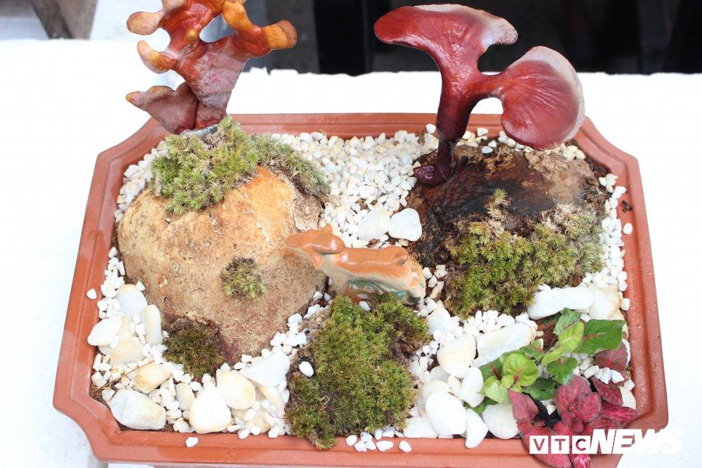 Anh: Nam linh chi bonsai doc la hut khach choi Thu do hinh anh 5