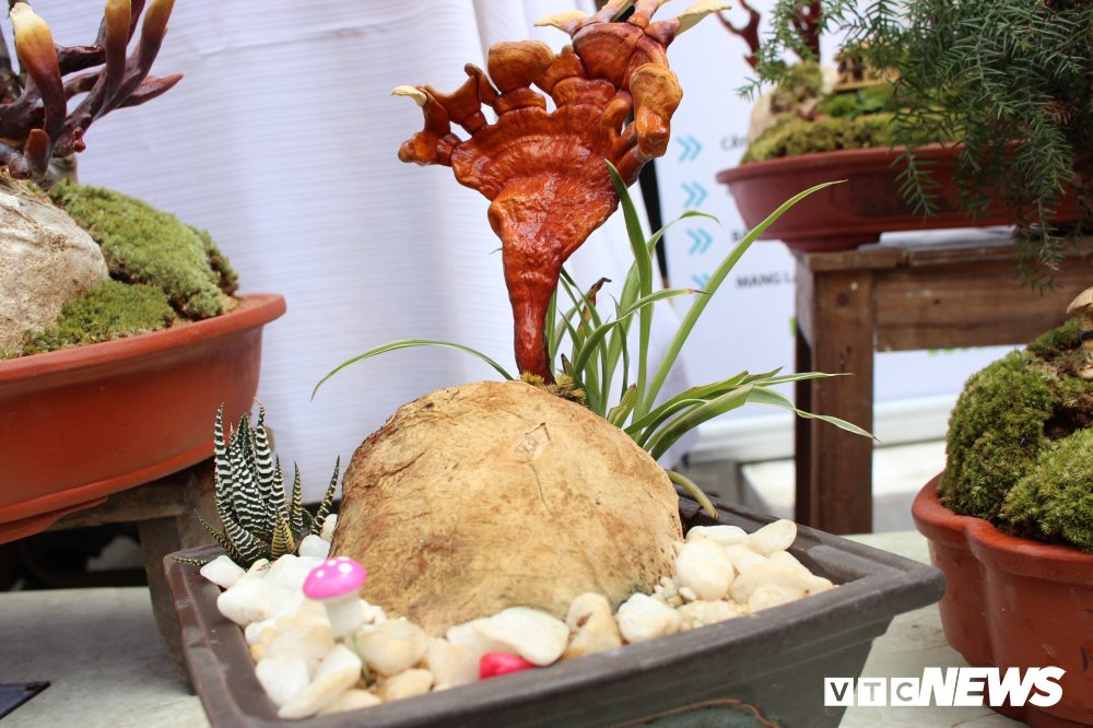 Anh: Nam linh chi bonsai doc la hut khach choi Thu do hinh anh 6