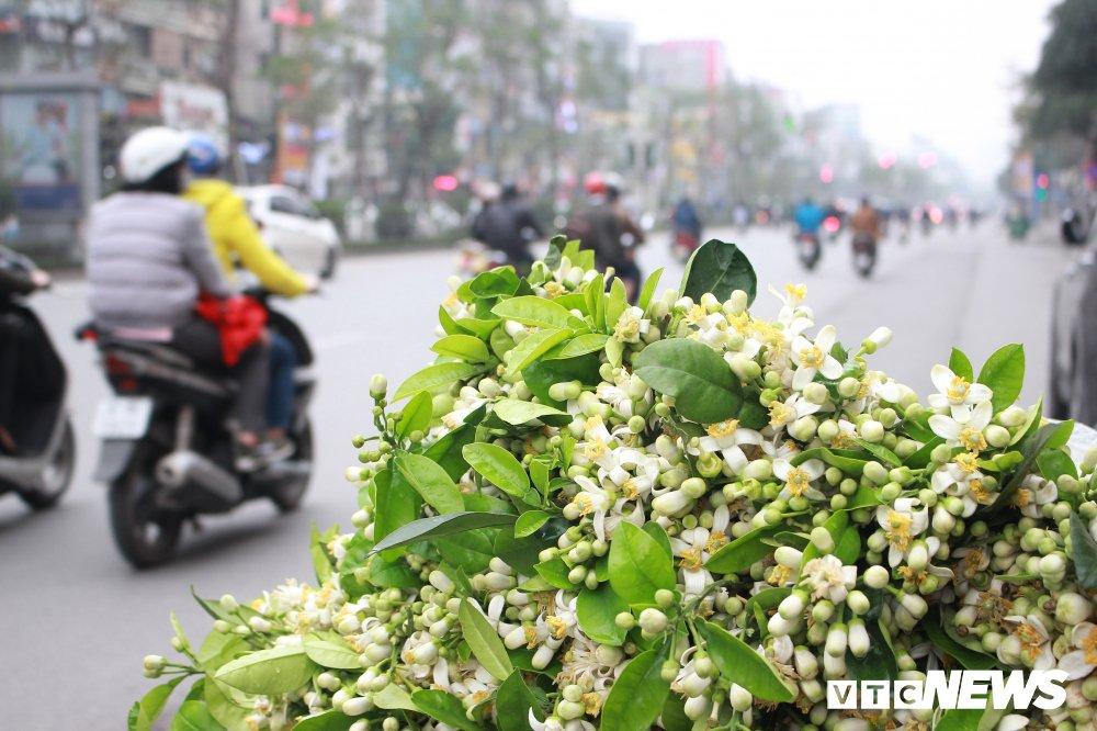 Anh: Ha Noi 'khoac ao' trang tinh khoi nhung ngay hoa buoi xuong pho hinh anh 2