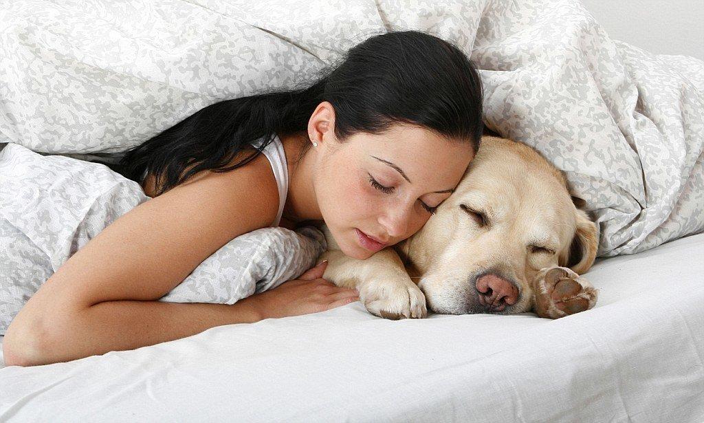 Tại sao chó thích ngủ với người? dấu hiệu cún cứng yêu bạn - Viện Thú Cưng
