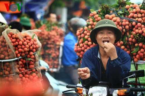 Thuc hu chuyen an vai mac benh viem nao Nhat Ban hinh anh 1