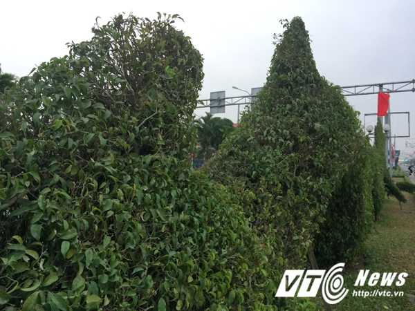 Anh: Bi 'nem da', rong vang o Hai Phong 'lot xac' thanh rong xanh hinh anh 5