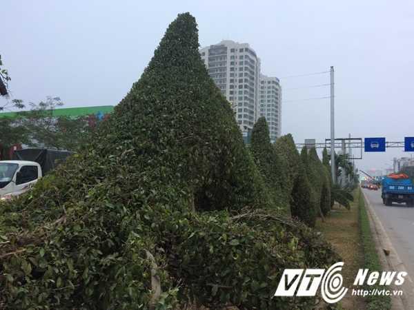 Anh: Bi 'nem da', rong vang o Hai Phong 'lot xac' thanh rong xanh hinh anh 9