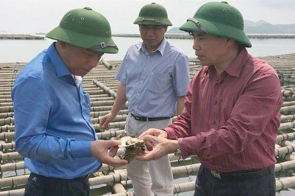 Vi sao hang ngan tan hau bi chet tai Quang Ninh? hinh anh 1