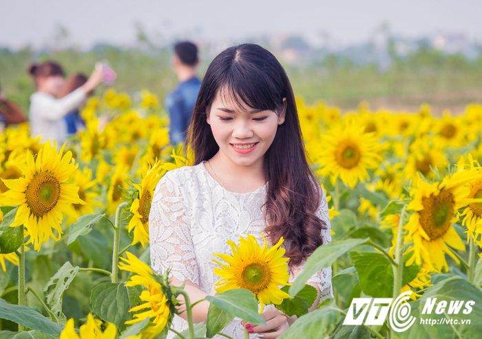 Anh, video: Thieu nu que lua dua sac ben canh dong hoa huong duong tuyet dep hinh anh 8