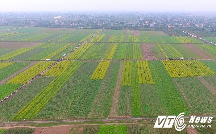 Video, anh: Canh dong hoa cai tuyet dep o Thai Binh nhin tu tren cao hinh anh 7