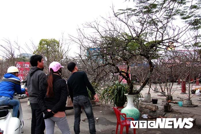 Anh: Can canh nhung goc dao da gia 90 trieu dong xuong pho Hai Phong hinh anh 22
