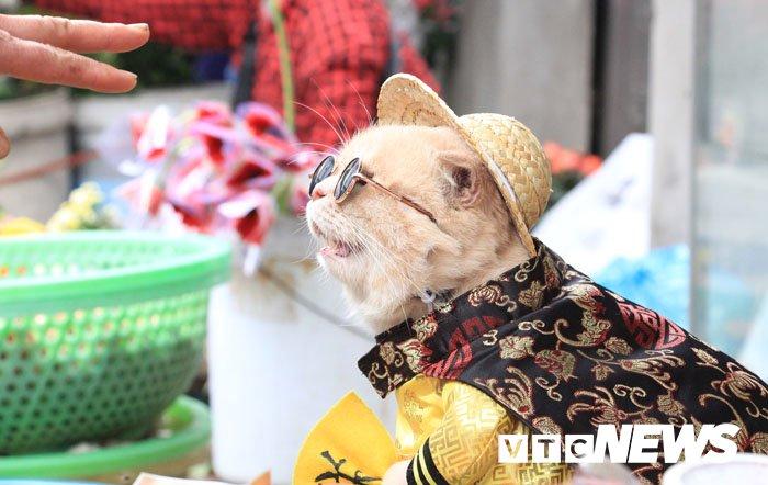 Video: Chu meo ten Cho ngo nghinh 'nhat vinh Bac Bo', di cho tao dang ban hang hinh anh 10