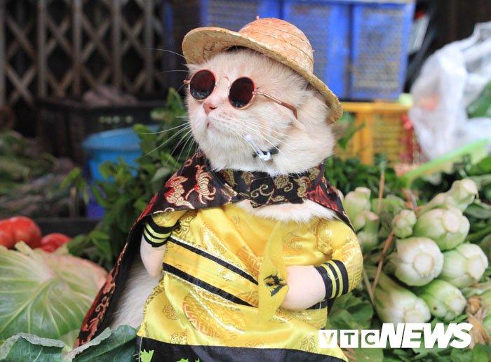 Video: Chu meo ten Cho ngo nghinh 'nhat vinh Bac Bo', di cho tao dang ban hang hinh anh 13