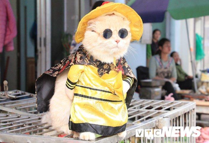 Video: Chu meo ten Cho ngo nghinh 'nhat vinh Bac Bo', di cho tao dang ban hang hinh anh 4