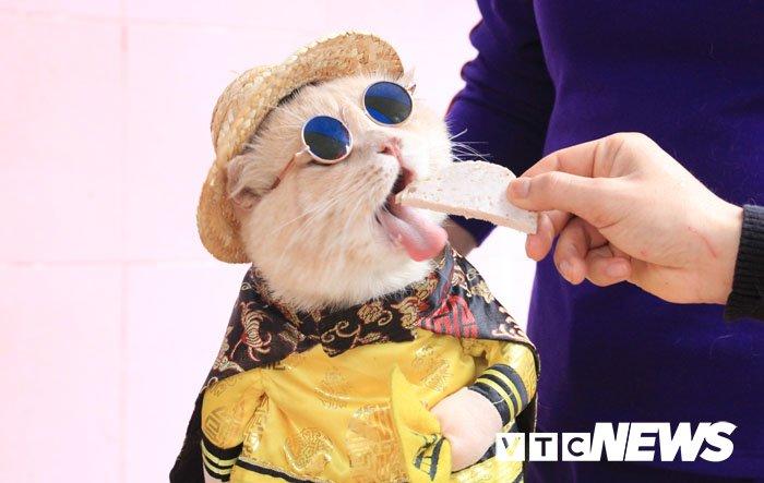 Video: Chu meo ten Cho ngo nghinh 'nhat vinh Bac Bo', di cho tao dang ban hang hinh anh 6