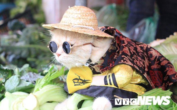 Video: Chu meo ten Cho ngo nghinh 'nhat vinh Bac Bo', di cho tao dang ban hang hinh anh 8