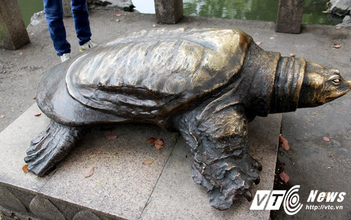 Chuyen phoi giong ly ky cua 'rua Ho Guom' khong lo o Trung Quoc hinh anh 3
