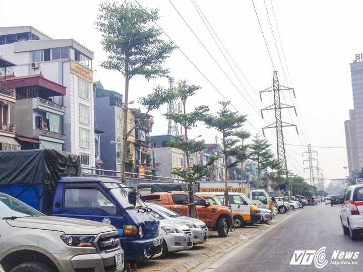 Cay xanh 'moc' duoi luoi dien cao the o Ha Noi: Chuyen gia khang dinh trong sai hinh anh 2