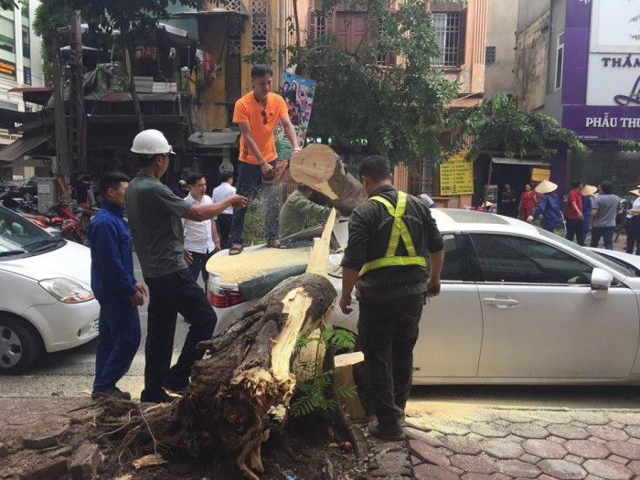 Cay phuong muc goc do de trung xe Lexus tai Ha Noi hinh anh 2