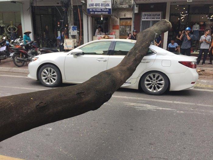 Cay phuong muc goc do de trung xe Lexus tai Ha Noi hinh anh 3