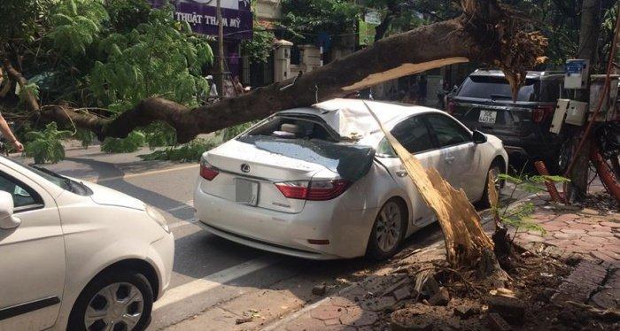 Cay phuong muc goc do de trung xe Lexus tai Ha Noi hinh anh 1